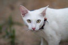Pequeño gatito en el campo Imágenes de archivo libres de regalías
