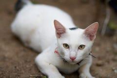 Pequeño gatito en el campo Fotografía de archivo libre de regalías