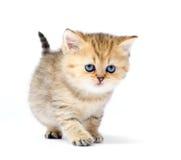 Pequeño gatito en el fondo blanco Fotos de archivo libres de regalías