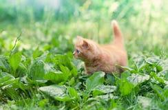 Pequeño gatito en el jardín imagenes de archivo