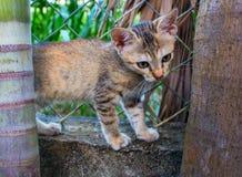 Pequeño gatito en el jardín El gato joven juega afuera El gatito mullido anaranjado y marrón sube la cerca Fotos de archivo