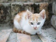 Pequeño gatito en el patio Fotos de archivo libres de regalías