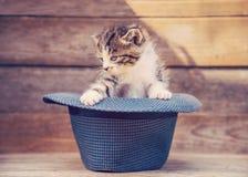 Pequeño gatito en el sombrero fotografía de archivo