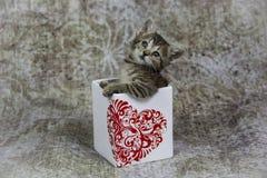 Pequeño gatito en envase del corazón Imagenes de archivo