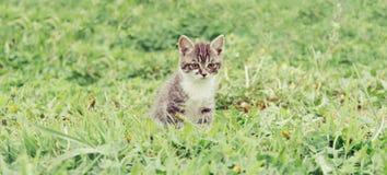 Pequeño gatito en hierba imagenes de archivo