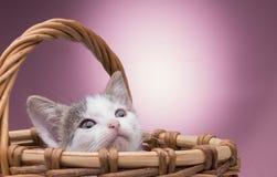 Pequeño gatito en la cesta Fotografía de archivo libre de regalías