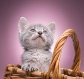 Pequeño gatito en la cesta Fotos de archivo