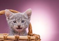 Pequeño gatito en la cesta Imagen de archivo libre de regalías