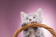 Pequeño gatito en la cesta Foto de archivo libre de regalías