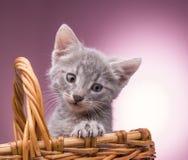 Pequeño gatito en la cesta Fotos de archivo libres de regalías