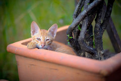 pequeño gatito en maceta Fotos de archivo
