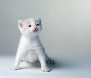 Pequeño gatito en un gris Imagenes de archivo