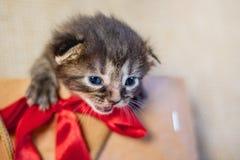 Pequeño gatito en un paquete del regalo El gatito es pres grandes de un cumpleaños imagen de archivo libre de regalías
