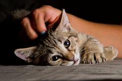 Pequeño gatito en una actitud divertida Foto de archivo libre de regalías