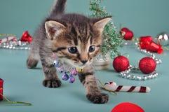 Pequeño gatito entre la materia de la Navidad Fotografía de archivo
