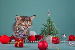 Pequeño gatito entre la materia de la Navidad Imagen de archivo libre de regalías