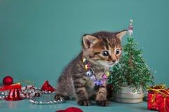 Pequeño gatito entre la materia de la Navidad Foto de archivo libre de regalías