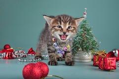 Pequeño gatito entre la materia de la Navidad Foto de archivo