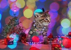 Pequeño gatito entre la materia de la Navidad Imagen de archivo