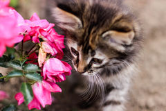 Pequeño gatito, gatito y flor rosada Fotografía de archivo