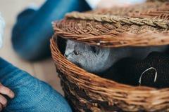Pequeño gatito gris en una cesta Imagenes de archivo