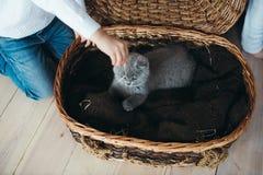 Pequeño gatito gris en una cesta Fotografía de archivo