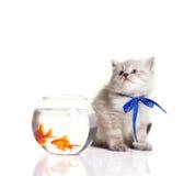 Pequeños gatito y goldfishes foto de archivo