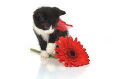 Pequeño gatito hermoso Fotografía de archivo libre de regalías