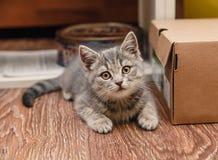 Pequeño gatito juguetón que se sienta al lado de la caja Foto de archivo