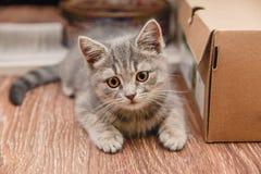 Pequeño gatito juguetón que se sienta al lado de la caja marrón Imagen de archivo