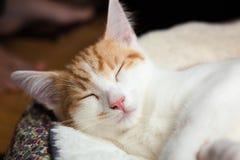 Pequeño gatito lindo Fotos de archivo libres de regalías