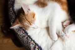 Pequeño gatito lindo Foto de archivo