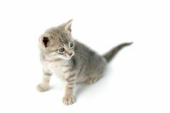 Pequeño gatito lindo fotos de archivo