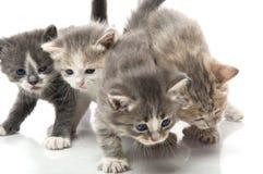 Pequeño gatito lindo, Foto de archivo
