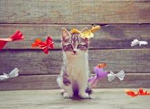 Pequeño gatito lindo imagen de archivo