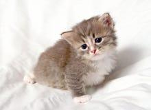 Pequeño gatito lindo Fotografía de archivo libre de regalías