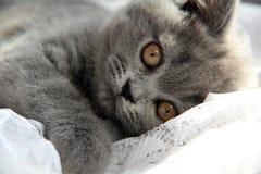 Pequeño gatito lindo Imágenes de archivo libres de regalías