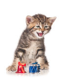 Pequeño gatito lindo Imagen de archivo libre de regalías