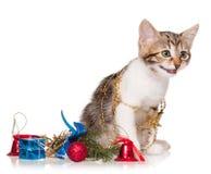 Pequeño gatito lindo Foto de archivo libre de regalías