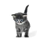 Pequeño gatito lindo aislado imagenes de archivo