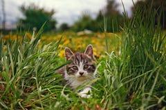 Pequeño gatito lindo al aire libre foto de archivo