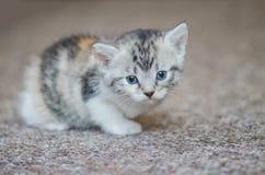Pequeño gatito lindo en la alfombra fotos de archivo