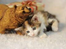 Pequeño gatito lindo en un interior del ` s del Año Nuevo en una manta mullida blanca con la estatuilla del oso y el regalo de la Foto de archivo