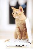 Pequeño gatito lindo en una computadora portátil del cuaderno Fotos de archivo libres de regalías