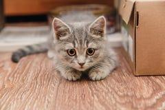 Pequeño gatito lindo que se sienta al lado de la caja marrón Fotos de archivo libres de regalías