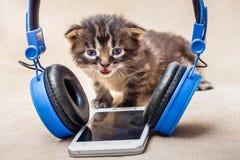 Pequeño gatito lindo rayado cerca de los auriculares El bebé escucha el mus imagen de archivo