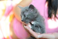 Pequeño gatito mullido en las manos Fotos de archivo