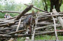 Pequeño gatito mullido que se sienta en una calle al revés y que mira en el bosque de Bali poco gato de la calle que se sienta en Imagenes de archivo