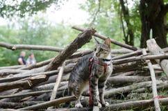 Pequeño gatito mullido que se sienta en una calle al revés y que mira en el bosque de Bali poco gato de la calle que se sienta en Fotografía de archivo libre de regalías