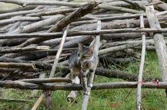 Pequeño gatito mullido que se sienta en una calle al revés y que mira en el bosque de Bali poco gato de la calle que se sienta en Foto de archivo libre de regalías